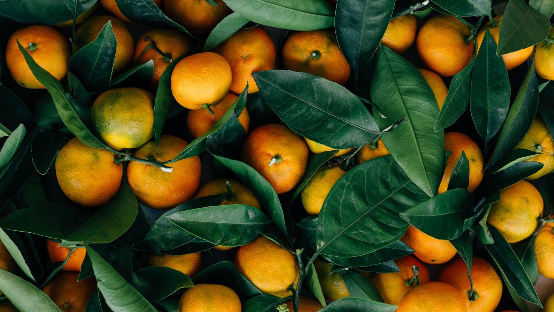 Como garantir um procedimento seguro na distribuição alimentar?